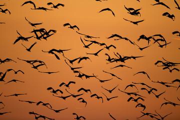 Flock of birds on the sky