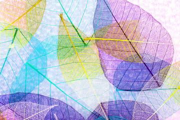 Spoed Fotobehang Decoratief nervenblad Abstract skeleton leaves background