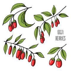 Goji berries sketch