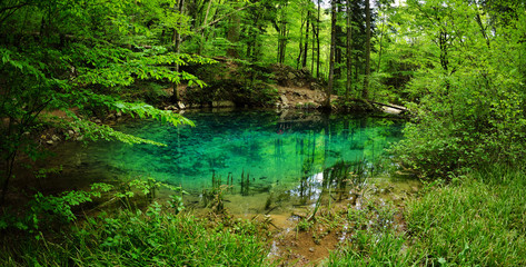 beautiful pond in the woods