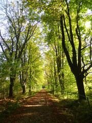Herbstlicher Waldweg im September (1)
