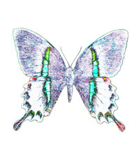 illustration of a color butterfly, mixed medium, white background.