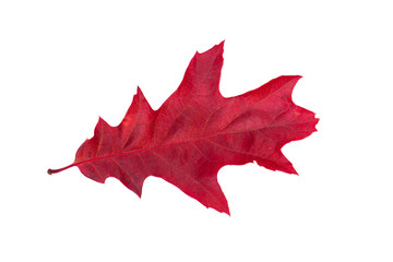 Closeup of  autumn leaf