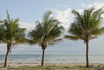 Coconut trees on a sea shore in Mui Ne, Vietnam.