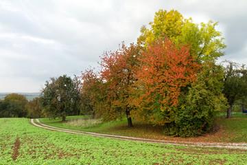 Bäume Herbst