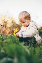 Little girl collects dandelions