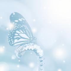 Beautiful butterfly on flower in dreamy scene, Soft focused