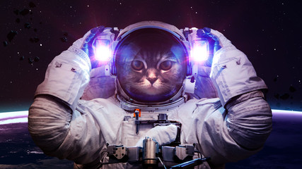 Poster UFO Beautiful cat in outer space. Elements of this image furnished by NASA
