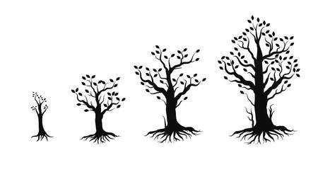 growing tree steps illustration
