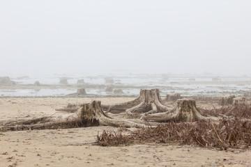 underwater stumps in the fog