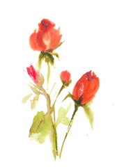 Red roses , watercolor illustrator