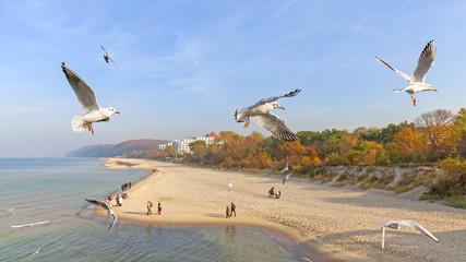 Flying birds above a beach.