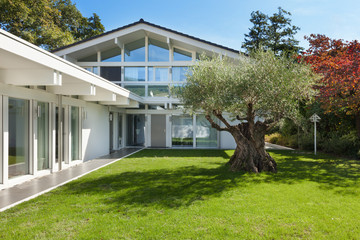 garden of a modern house with olive tree