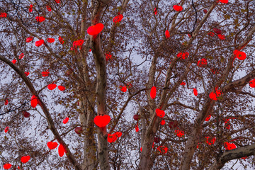 A tree iluminated with red hearts at Christmas