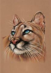 Puma, cougar painting