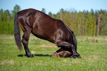 horse bows down