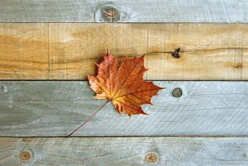 Lone Sugar Maple Leaf on Rustic Wood Background