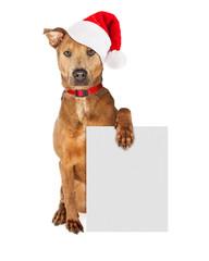 Wall Mural - Christmas Santa Dog With Blank Sign