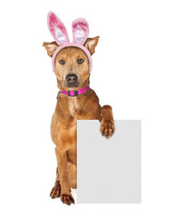 Wall Mural - Easter Bunny Dog Holding Blank Sign