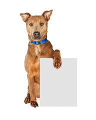 Wall Mural - Large Crossbreed Dog Holding Blank Sign