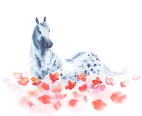 Watercolor dapple grey horse on the field of red poppies flowers. Beautiful hand drawing illustration on white.