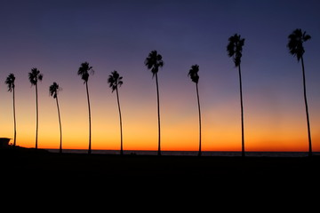 Row of palm trees silhouettes during a colorful sunset at the beach in California