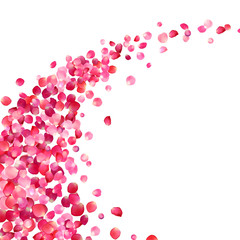 white background with pink rose petals vortex