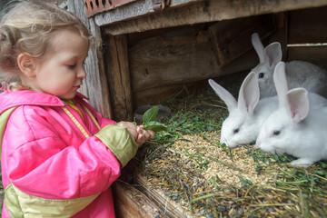 Preschooler blonde girl feeding farm domestic rabbits with fleawort leaf