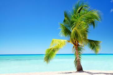 Exotic palm tree in tropical Saona Island