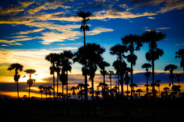 Palm trees and the evening sky