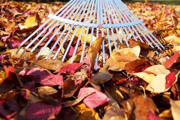 Rechen im Bunten Herbstlaub