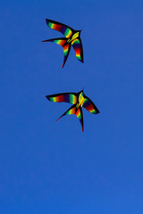 Colorful kites flying isolated on blue background
