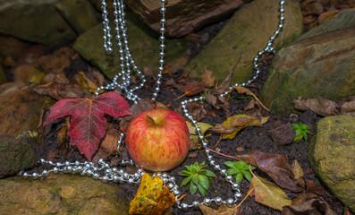 Apple fallen from an apple tree in autumn