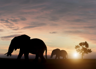 Wall Murals Cappuccino Elephants in sunset