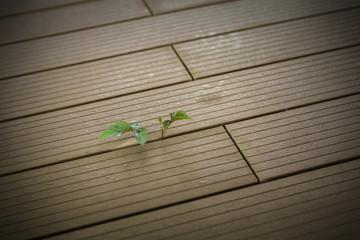 Pflanze Perspektive Zukunft