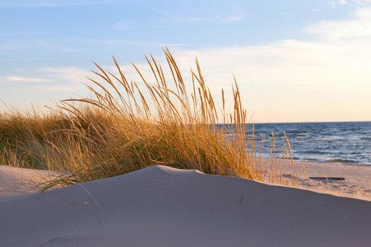Autumn Dune Grass - Lake Michigan