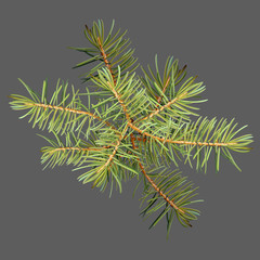 Realistic needles, spruce branches Christmas tree, detailed, frame of spruce branches, template for design