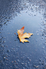 Maple leaf on wet ground