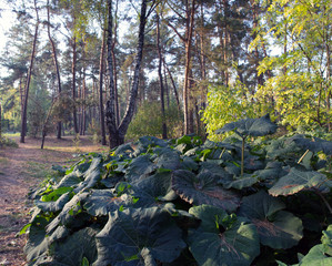 Autumn Landscape. Park in Autumn. The bright colors of autumn in
