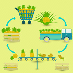 Process of pineapple. Pineapple production steps. Pineapple tree, harvest, transport, separation of healthy and rotten pineapples, sale at the grocery store. In a circular scheme.
