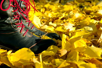 Woman walking on a street full of dead leaves during Autumn. Feet on the yellow leaves. walk on the foliage. shoes with yellow leaves