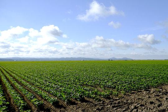 秋田県の畑 farm in Akita Japan
