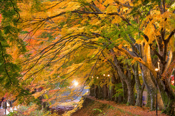 Maple Corridor of Japan
