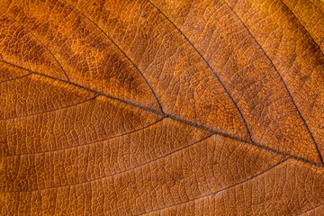 Autumn leaves. Texture of autumn leaves.. Background of leaves.