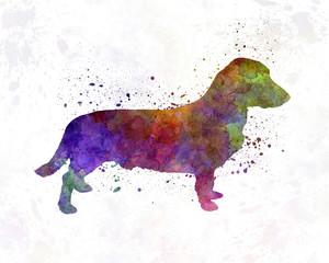 Drever in watercolor