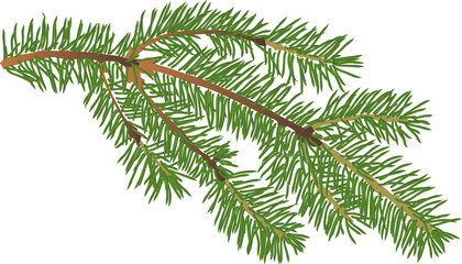 small green fir branch isolated illustration