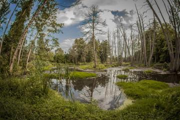 Naturalny staw po środku lasu otoczony drzewami.