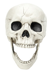 Laughing Skull on White