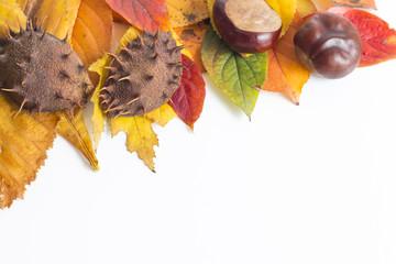 Fototapeta Jesienne liście na białym tle obraz