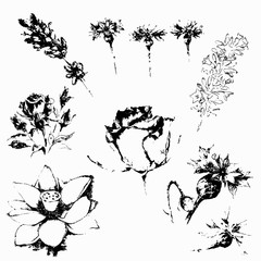 Illustration of handdrawn flowers